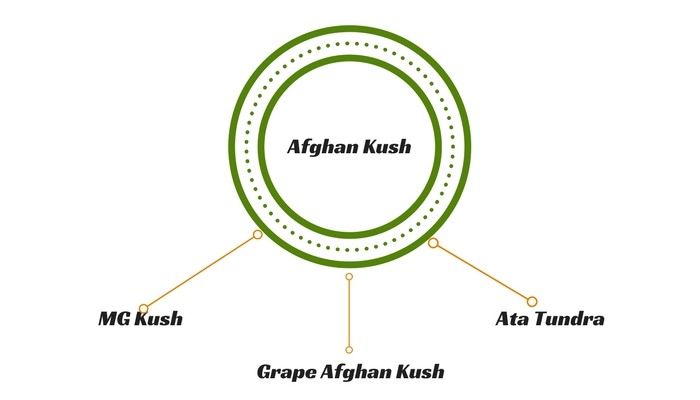 Afghan Kush Lineages
