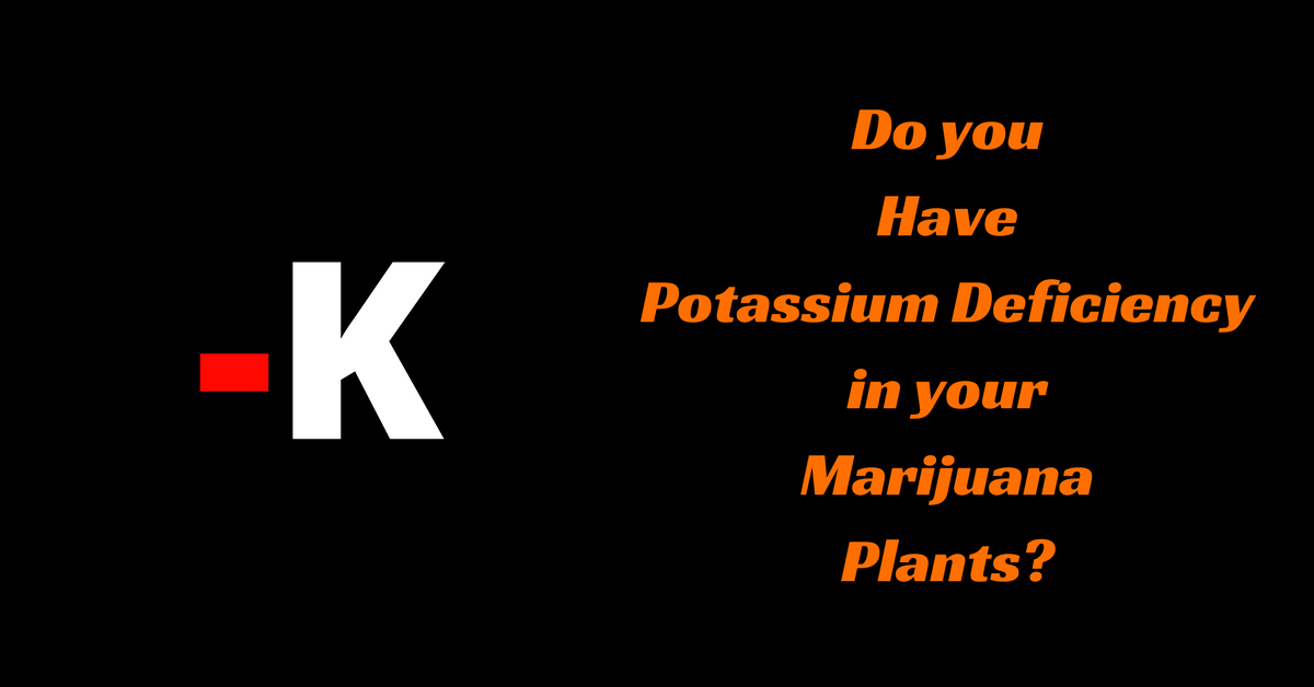 Do you Have Potassium Deficiency in your Marijuana Plants?