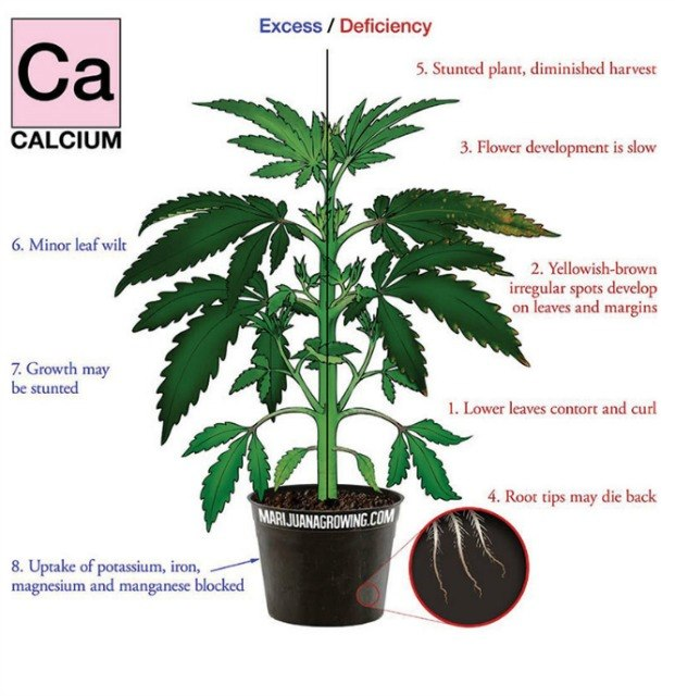 calcium deficiency marijuana diagram