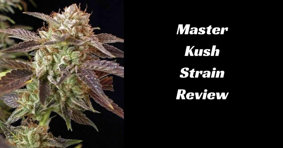 Master Kush Strain Review