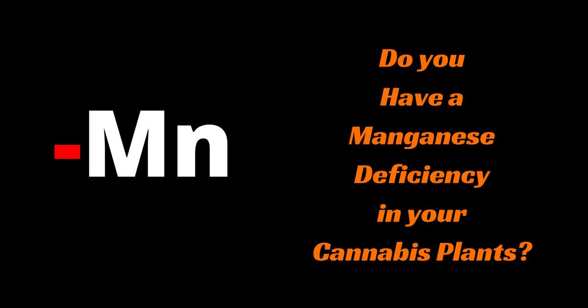 Do You Have A Manganese Deficiency In Your Cannabis Plants