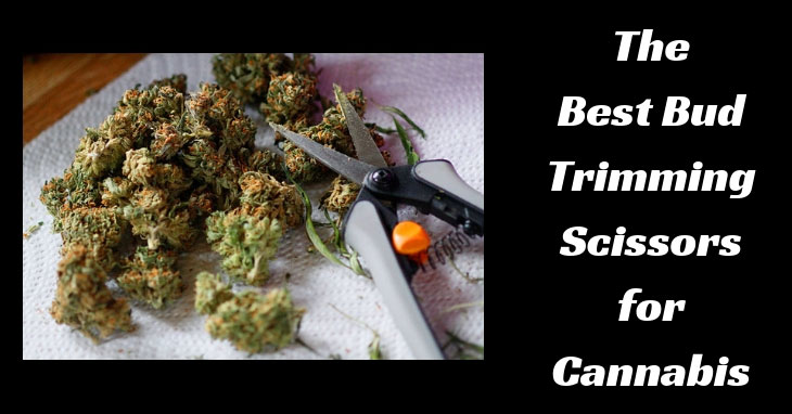 🔥The Best Bud Trimming Scissors for Cannabis in 2019! 🔥