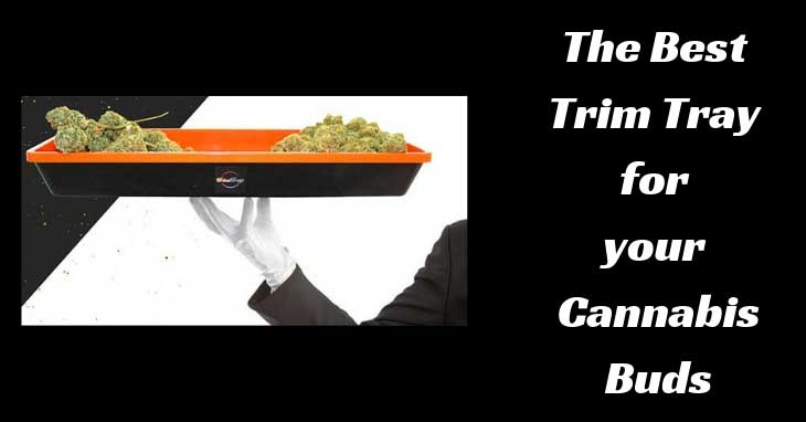 The-Best--Trim-Tray--for--Cannabis-Buds