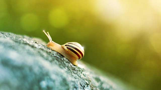 slug-snail-on-cannabis-plant